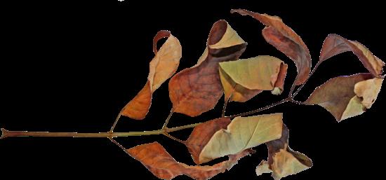 Засушенные цветы гербарий купить